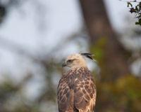 Save Singapore's Endangered Bird Habitat!