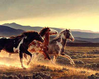 STOP The Capturing of American Wild Horses