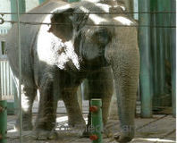 Edmonton, Stand Up for Lucy the Elephant