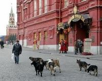 Russia has one of the weakest animal cruelty laws in the developed world.