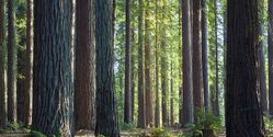 Protect California Redwood Forests From Winery Development