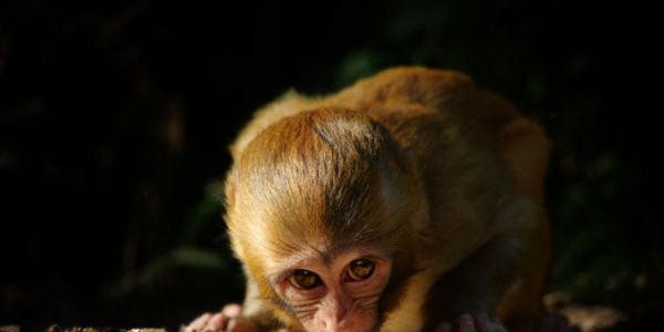 Don't Fund Baby Monkey Abuse With Tax Dollars!