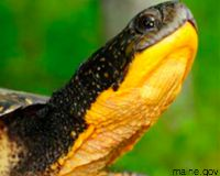 Tell the U.S. Fish and Wildlife Service to Protect Freshwater Turtles