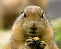 Stop Prairie Dog Poisoning