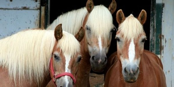 Get Maximum Penalty for man in drive-by-shooting of horses