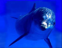 Stop Killing Dolphins with Oil Exploration