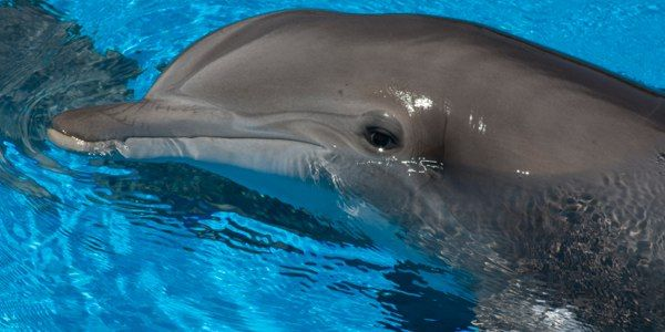 Stop New Dolphinarium in the Turks and Caicos Islands