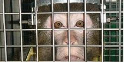 Tell Harvard- Sanctuary for Research Primates