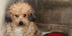 Help Shut Down Puppy Mills