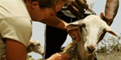 Help Improve U.S. Military Medicine: Stop Live Animal Trauma Training