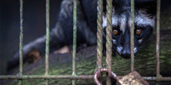 End Civet Cat Suffering