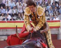 Bloody Bull in Bullfight