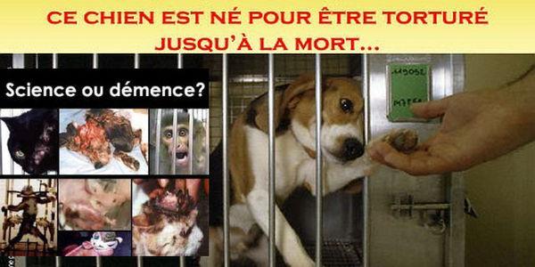 Obtenir la Fermeture du Centre d'Expérimentation Animale de l'Hôpital de la Timone à Marseille 552721-1390313791-wide