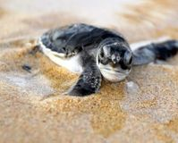 Save the Leatherback Sea Turtle -- Take Action...