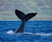 Obama: Keep Commercial Whaling Illegal