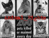 Animal Rights Bill