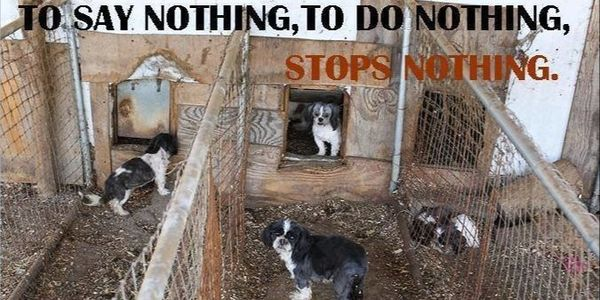 Petition Keep Puppy Place Out Of Springfield Ma