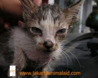 Stop the culling of cats at Ancol Jakarta