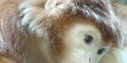Urge Pet Store to Move Display Monkeys to Sanctuary