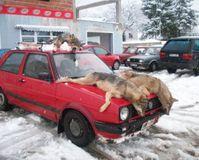 Stop Wolf Hunting in Bosnia & Herzegovina