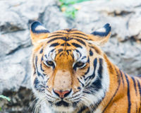Ban Pesticides Used to Kill Tigers!