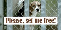 AstraZeneca: Please set the Beagles free!