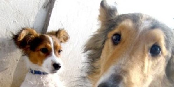 Find & Prosecute People Who Deserted Nine Dogs Now Found Dead