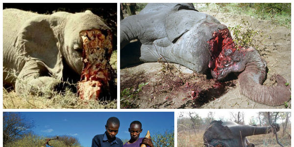 Urge Rakuten.com to stop selling ivory products