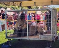 Tell University to Stop Displaying Lion