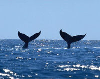 Stop Whale Hunting Plans in S. Korea