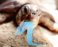 No More Plastic Bag Pollution