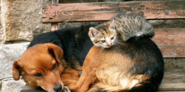 International March to End the Dog and Cat Meat Trade April 4th, 2015 ~~ at 9:00am in UTC+01