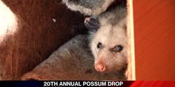 Stop the NC Possum Drop!