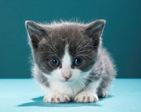 Stop St. Louis Children's Hospital Using Cats in Health Experiments