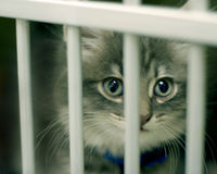 Be a Responsible Owner, Spay or Neuter Your Pet Before Kitten/Puppy Season!