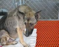 Abused GSD Being Denied Justice