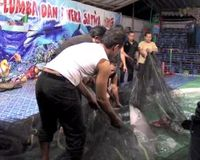 Close Down Indonesian Dolphin Traveling Circus