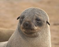 Demand an end to the slaughter of seals in Namibia