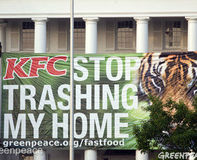 Tell KFC- Stop Trashing Rainforest