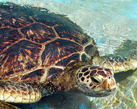 Save Endangered Sea Turtles from Euthanasia
