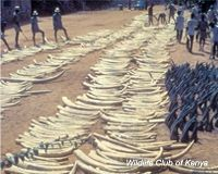 Stop Illegal Wildlife Trade