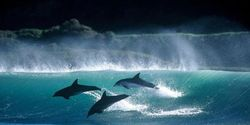 WORLD AID FOR DOLPHINS AND WHALES CAMPAIGN TWEET STORM~ SUNDAY 8 JUNE 2014 @7PM (GMT)