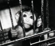 No Funding for Animal Experiments