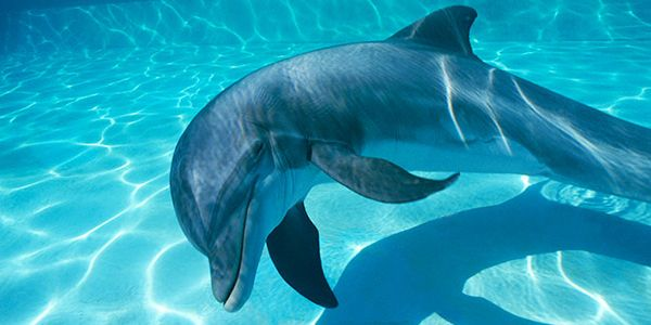 itravel2000 - stop promoting dolphinariums with vacation sales