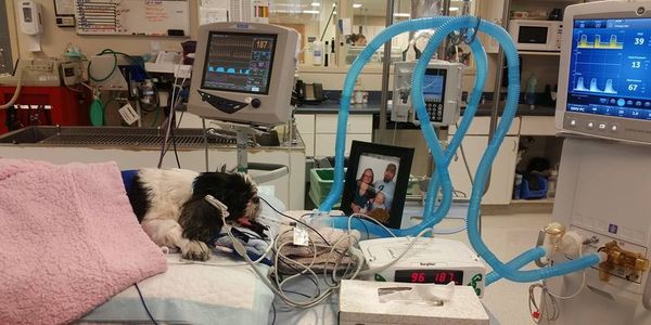 Dog in vet office hooked up to tubes and machines