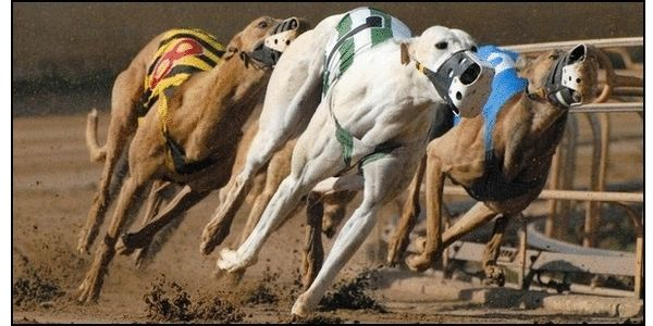 Say NO to Chinese Greyhound Racing Stadiums