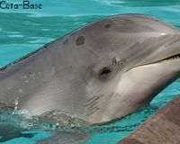 Keep the Dolphin Cortez From Moving to Another Facility!