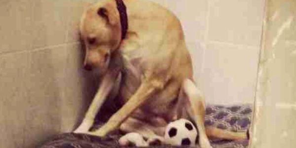 Petition Craigslist Suspend Accounts Of Pet Breeders
