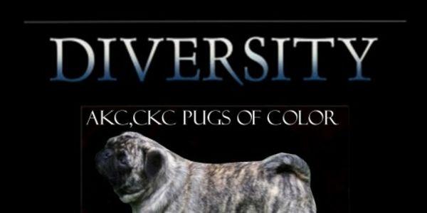 Petition Pug Color Petition Diversity Akcckc Pugs Of All Colours