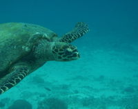 Save the Fish, Turtles and Dolphins of the Vizag Coast